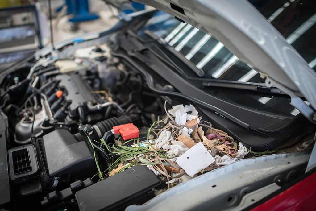 Newborn rats in nest made from scraps in a customer's engine at our auto repair shop in Mays Landing, NJ